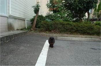 黒ちゃん1.jpg